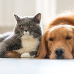 service sortie et nourriture chien et chat